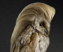 Rene Mesman, Birds with fab do's