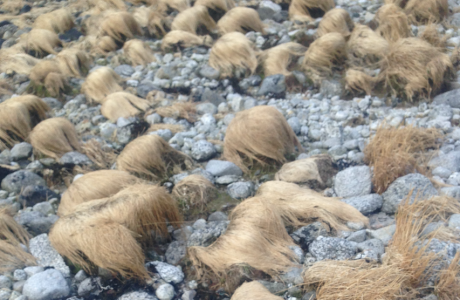 A shore full of wigs where Donald Trump might find a decent toupee