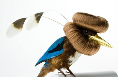 Karley Feaver / extravagant hairdo's